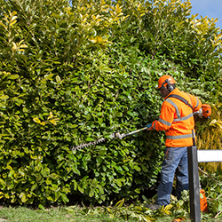 Hedge and shrub cutting